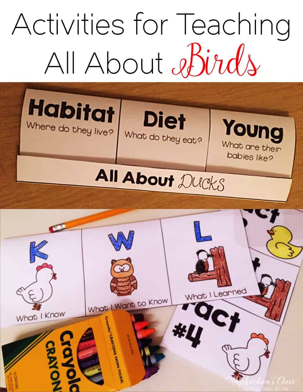 Studying the characteristics of birds is made engaging, fun, and interactive with these bird activities for little learners! Homeschoolers, kindergarteners, and first graders will love this bird unit! #birdunit #birdscience #kindergarten #firstgrade #homeschool #scienceteacher