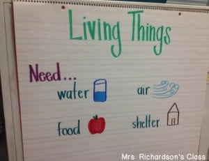 Living Things Anchor Chart