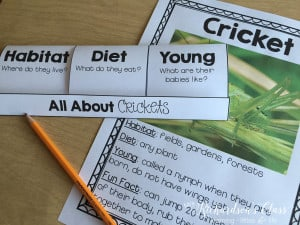 6 Ideas for teaching about insects for kindergarten, first grade, and even second grade!
