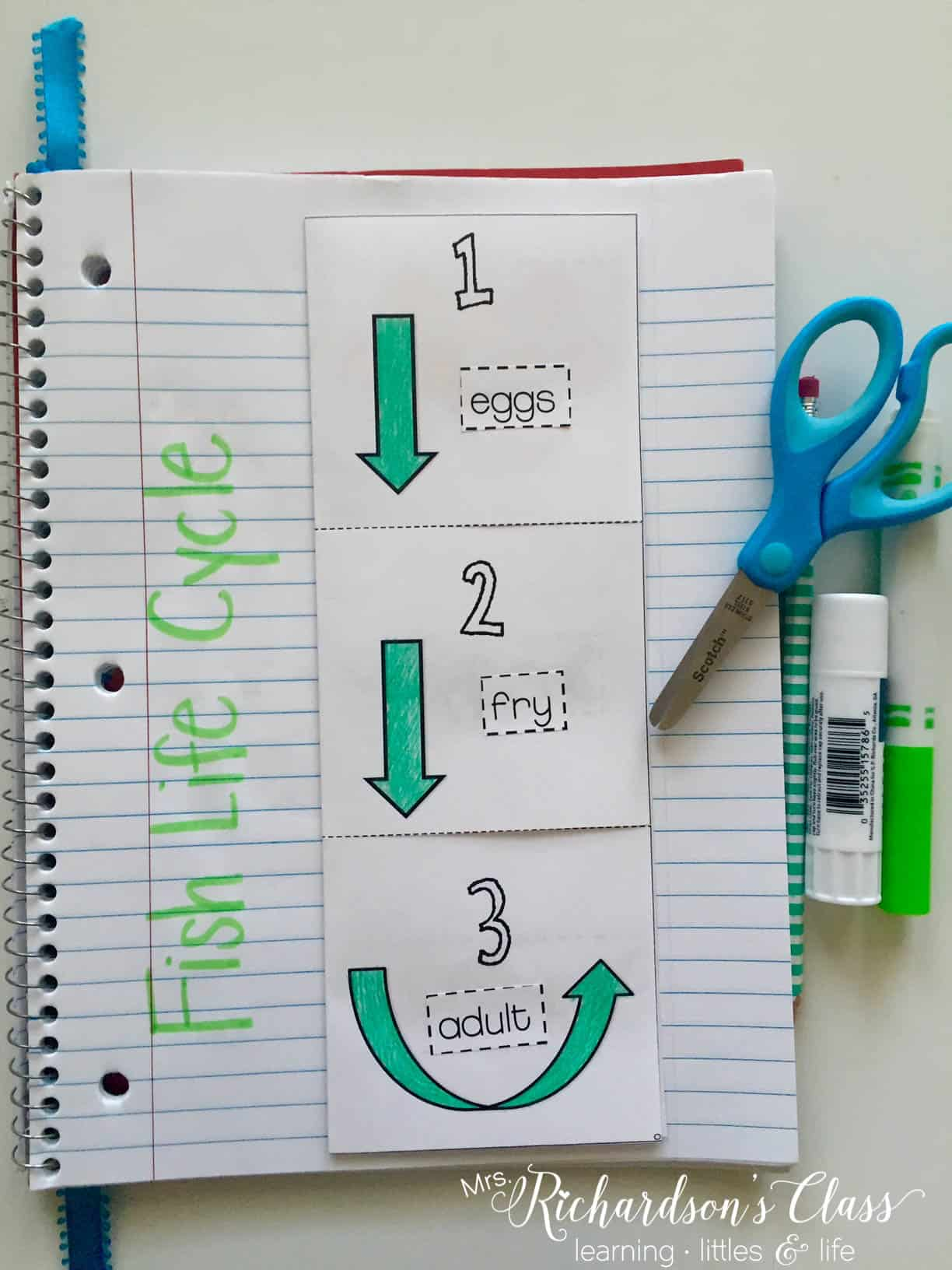Using science interactive notebooks is a great way to work in some independent writing time for your students. This fish life cycle book does just that!