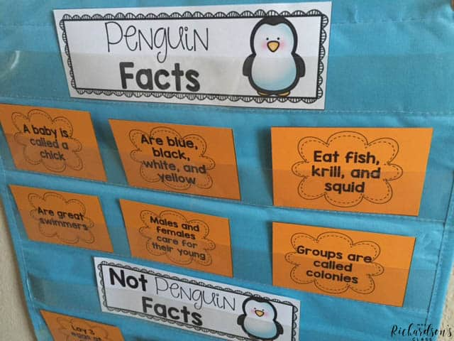 Explore penguins as students sort penguins facts in this non-fiction unit that integrates science, reading, and writing!