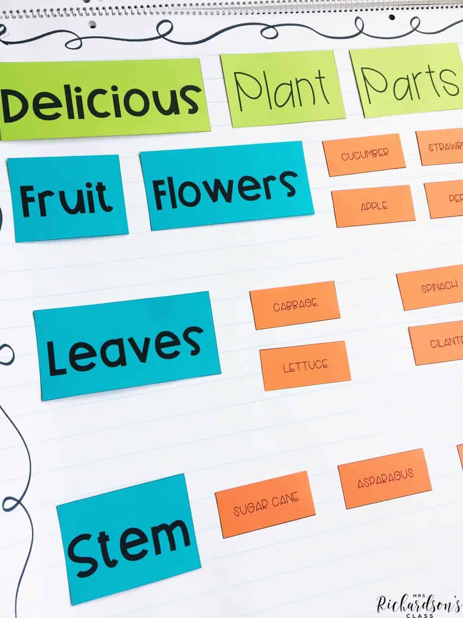 Plant parts anchor chart for students to sort different parts of plants that we eat!
