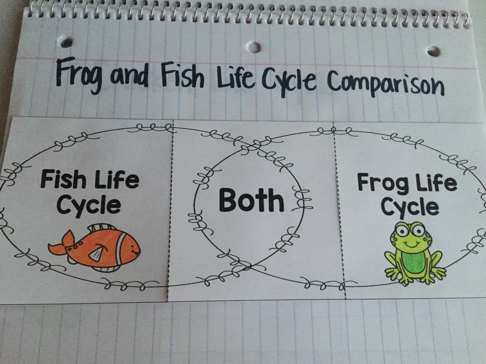 Use these life cycle interactive notebook pages to engage your first grade students. They are perfect activities for learning all about life cycles.