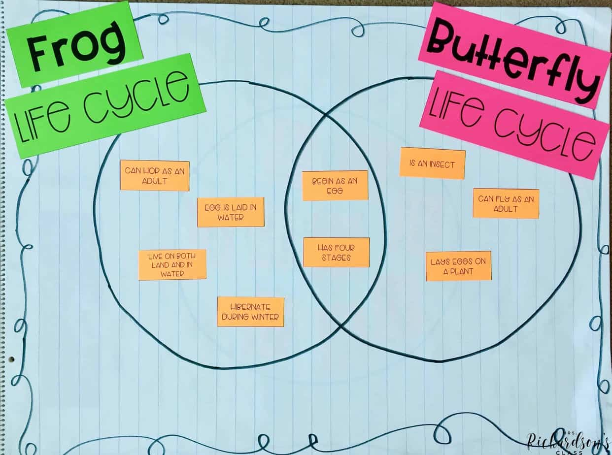 Use these easy to make life cycle anchor charts to anchor learning in your first grade classroom.